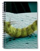 Mosquito Larva, Sem Spiral Notebook