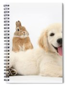 Netherland-cross Rabbit And Golden Spiral Notebook