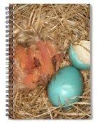 Newborn Robin Nestlings Spiral Notebook