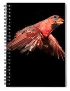 Northern Cardinal In Flight Spiral Notebook