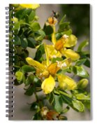 Ocotillo Wild Flower Spiral Notebook