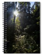 Old Forests At Evo Spiral Notebook