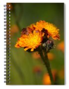 Orange Hawkweed Spiral Notebook