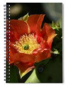 Orange Prickly Pear Blossom  Spiral Notebook