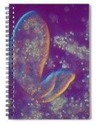 Paramecium Lm Spiral Notebook