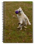 Pasha Spiral Notebook