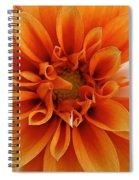 Peach Petals Spiral Notebook