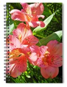 Pink And Green Spiral Notebook