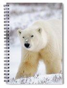Polar Bear, Churchill, Manitoba Spiral Notebook