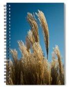 Pompas Grass 1 Spiral Notebook