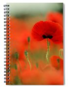 Poppy Flowers 01 Spiral Notebook
