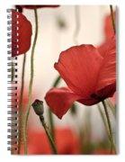Poppy Flowers 04 Spiral Notebook