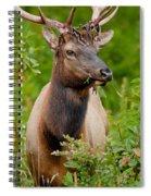 Portrait Of A Bull Elk Spiral Notebook
