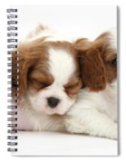 Puppies Spiral Notebook