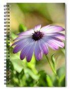 Purple Daisy  Spiral Notebook