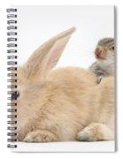 Rabbit And Squirrel Spiral Notebook