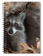 Raccoon Procyon Lotor Spiral Notebook
