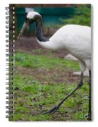 Red Crowned Crane Spiral Notebook