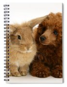 Red Toy Poodle And Rabbit Spiral Notebook