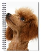 Red Toy Poodle Spiral Notebook
