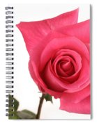 Rose Blooming Spiral Notebook