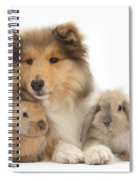 Rough Collie Pup With Two Young Rabbits Spiral Notebook