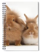 Sandy Lionhead Rabbits Spiral Notebook