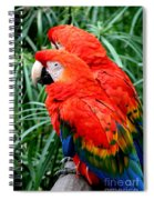 Scalet Macaw Spiral Notebook