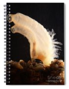 Sea Vase Spiral Notebook