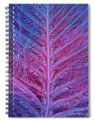 Sem Of Eastern Bluebird Feathers Spiral Notebook