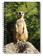 Sentinel Meerkat Spiral Notebook