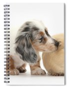 Silver Double Dapple Dachshund Pup Spiral Notebook