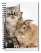 Silver Tabby Cat And Lionhead-cross Spiral Notebook