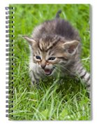 Small Kitten In The Grass Spiral Notebook