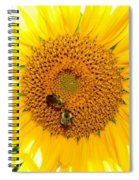 Spider And The Bees Spiral Notebook