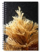 Spiral-tufted Bryozoan Spiral Notebook