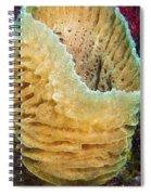 Sponge Spiral Notebook