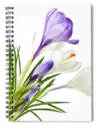 Spring Crocus Flowers Spiral Notebook