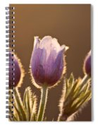 Spring Time Crocus Flower Spiral Notebook