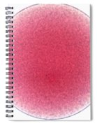 Starfish Egg Spiral Notebook