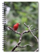 Summer Tanager Spiral Notebook