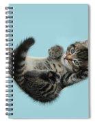 Tabby Kitten In Hammock Spiral Notebook