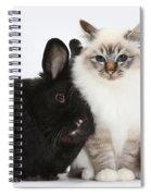 Tabby-point Birman Cat And Black Rabbit Spiral Notebook