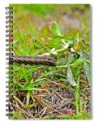 Tersa Sphinx Caterpillar Spiral Notebook