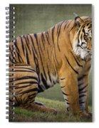 The Sumatran Tiger  Spiral Notebook