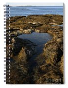 Tidepool In Maine Spiral Notebook