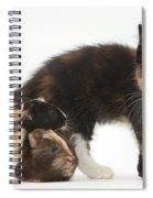 Tortoiseshell Kitten With Baby Spiral Notebook