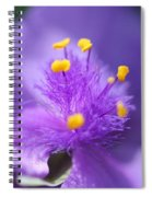 Tradescantia Named Andersonia Mauve Spiral Notebook