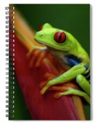 Tree Frog 19 Spiral Notebook