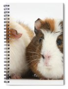Two Guinea Pigs Spiral Notebook